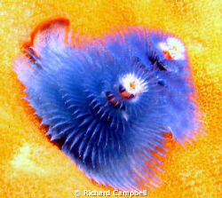 blue is cool--Sealife DC-1000 by Richard Campbell