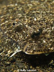 Flounder by Budy Lukman