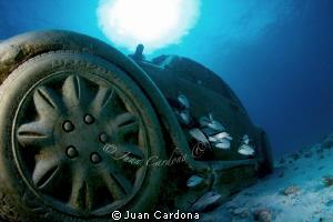 Musa by Juan Cardona