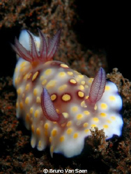Nudibranch, Nikon D200 by Bruno Van Saen