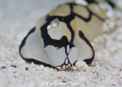 Strange face for a nudi... by Francesca Truter