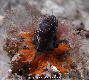 """Searching for the ultimate partner"" 