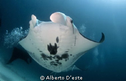 My friend Andrea & Partner in Raja Ampat, Paradise Dancer by Alberto D'este