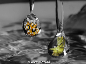 Nudi drops.... by Alex Varani