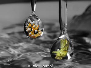 Nudi drops.... by Alex Varani
