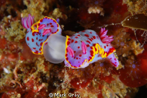 Nudi Porn? by Mark Gray