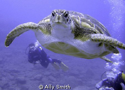 Turtle taken off the south coast of Tenerife.