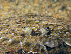 Flounders, G12 + UCL165 by Jun Tagama