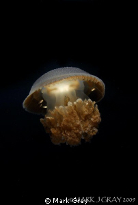 """""""Glowing Response""""....Jellyfish and Friends by Mark Gray"""