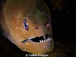 Moray Eel taken with olympus pen E-PL1,lens 14-42 mm with... by Yudhie Pratama