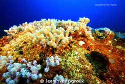 Mauritius Soft Coral Table at Mon Choisy Mauritius by Jean-Yves Bignoux