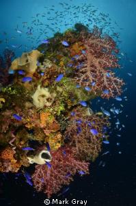 """Colourful Rust"". Coral growth on the Fujikawa Maru at Tr... by Mark Gray"