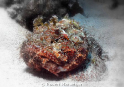 Scorpionfish at Cayman Brac. Soft focus, deleted some color. by Robert Michaelson