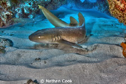 A Nurse Shark shows off for the camera by Nathan Cook
