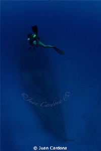 Wreck dive by Juan Cardona