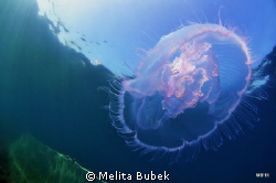 Nikon d90, tokina 10-17mm fisheye, nauticam housing by Melita Bubek