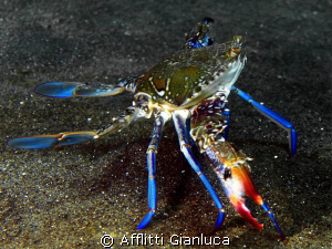 big crab by Afflitti Gianluca