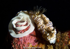Nudibrancia With Eggs by Jagwang Koo