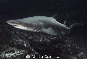 bull sharks by Afflitti Gianluca