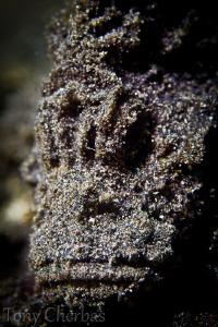 Stone by Tony Cherbas