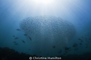 Swim to the Sun by Christine Hamilton
