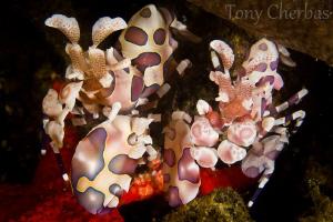 Starfish Killers. by Tony Cherbas