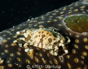 Crab on the worm by Afflitti Gianluca