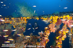 WW2 Wreck on the west coast of Sabah acessed from the Dow... by Richard Swann