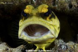 Jaw fish by Marcello Di Francesco