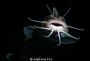 Cat Fish by Jagwang Koo