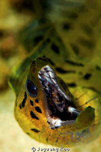 Moray Eel by Jagwang Koo