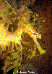 """The Beauty in our Bay""