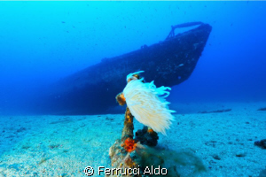 Wreck of Submarine Rubis situated in South France near St... by Ferrucci Aldo