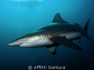 black tip by Afflitti Gianluca