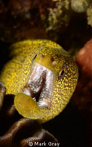 """Dental Work""...Abbotts Moray by Mark Gray"