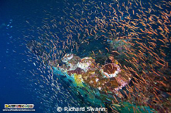 Bow of the Rice Bowl WW2 wreck just 40 mins boat trip fro... by Richard Swann