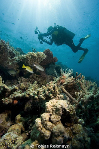 Ending the dive in the shallows, Umma Gamar, Hurghada. by Tobias Reitmayr