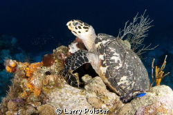 Dinner time at 125' on sponge, Cozumel by Larry Polster