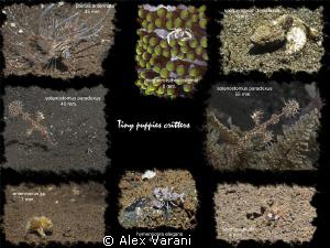 Tiny puppies critters by Alex Varani