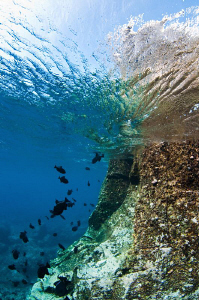 Black Durgon schooling around a reef formed by volcanic rock by Paul Colley