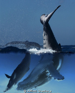 whales by Afflitti Gianluca