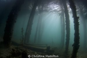 Under The Jetty by Christine Hamilton