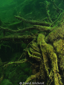 Root Study 1. I  find these to be an interesting 'still l... by David Gilchrist