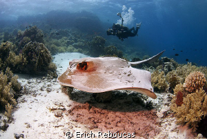 "Underwater photographer at the ""office""! by Erich Reboucas"