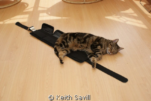 My cat wants to go diving!? I left my kit out to dry afte... by Keith Savill