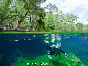 The start of a dive in Ponderosa Cenote, Mexico. by Nick Blake