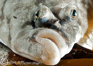 A face only a mother could love.