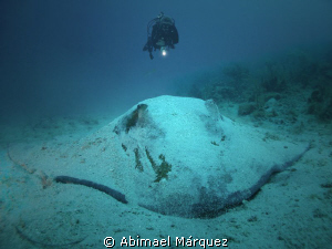 The Diver and the Southern Stingray, Vieques, PR. by Abimael Márquez