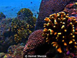 Larak island by Hamid Shamsi