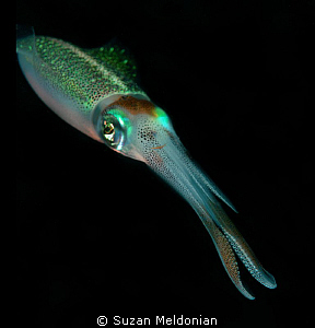 Squid by Suzan Meldonian